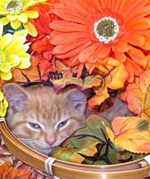 Drowsy Kitty Cat Kitten, Flower Basket,Fall Colors
