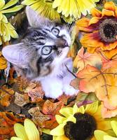 Kitty Cat Kitten Chewing Fall Leaves,Flower Basket
