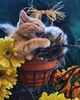 Psycho Cat - Angry Kitten biting Kitty, Flower Pot