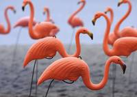 Flamingos on Beach