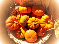Miniature Pumpkins,Wicker Basket,Fall Autumn Theme