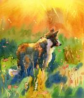 Collie in the meadow