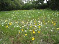 Texas Hill Country WIld Flowers