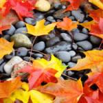 Fall Tree Leaves art prints Colorful Autumn Rocks