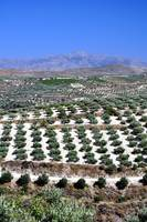 Agriculture in Crete, Greece.