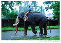 I Love Thrissur