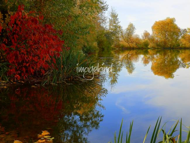 Fall Scene - Beautiful Sunny Day