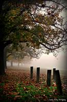 Cool Autumn Fog