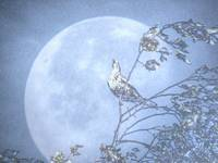 Bird in the Moon (HDR)