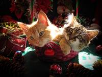 Christmas Kittens Together, Xmas Kitty Cats Basket