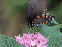 Brookside Butterfly