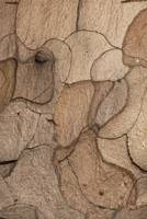 Close up of the pine bark