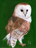 Hoooo Are You - Barn Owl White Face