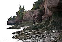 Beach at Hopewell Rocks