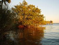 Autumn on the Indian River