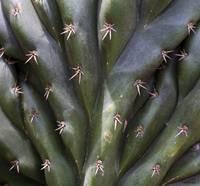 Cactus01 by Anne Harai