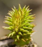Cactus02 by Anne Harai