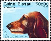 Sabujo dog stamp.