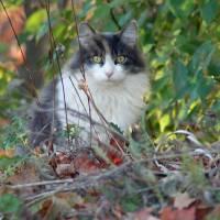 Cat in Woods by Karen Adams