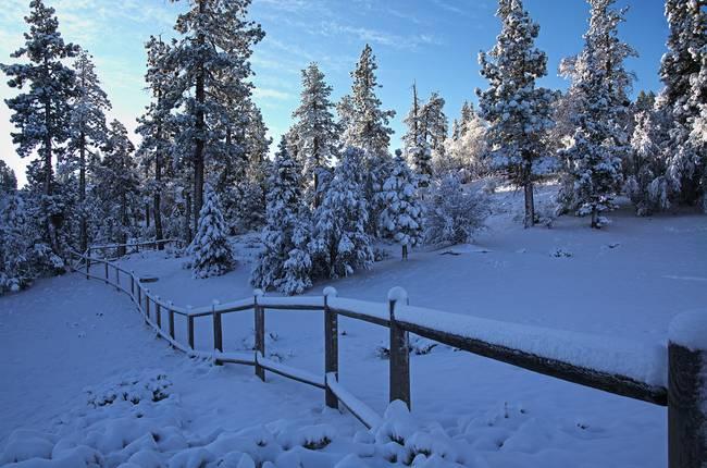 Winter Sunrise In Meadow Glen, Big Bear Lake, CA