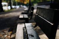 Bench and Fall