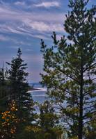 Lake Michigan Shimmering Through the Trees