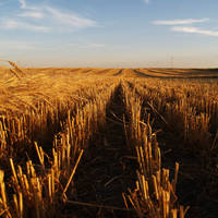 Harvest by Thirteenth Avenue Photography