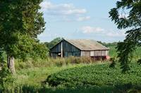 Farm Shed and Soybeans