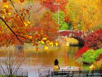 Autumn Paradise, NYC Central Park