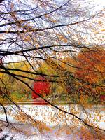 Autumn Collage, NYC Central Park