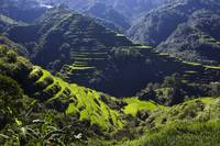Banaue Rice Terraces 4