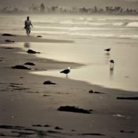 """""""Man Walking Down Beach"""" by ericvondy"""