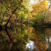 Golden Swampland by Carol Groenen