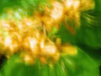 Flowers Motion 1
