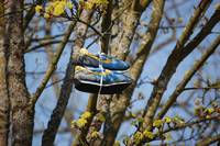 The Greenlake Tree Shoes