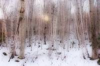 Wintry forest - haze 2