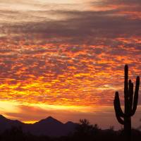 """Arizona November Sunrise With Saguaro"" by lightningman"