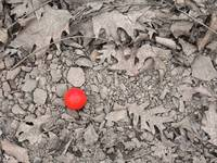 Little Red Ball