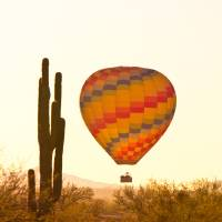 """""""Early Golden Light Hot Air Balloon And Saguaro Cac"""" by lightningman"""