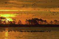 Chincoteague National Wildlife Refuge Sunset