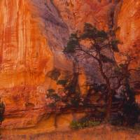 Capital Reef Art Prints & Posters by Terry Crain