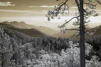 Sequoia View - Infrared Trees Landscape
