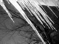 Icicles in a black and white picture