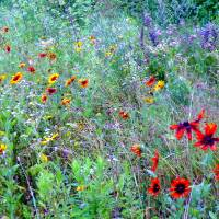 Wild Flower Field Art Prints & Posters by Gene Cyr