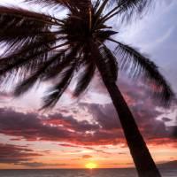 """Maui Hawaii Coconut Palm Tree Sunset"" by DustinKRyan"