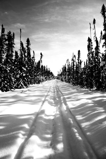 Winter landscape vertical snowy trail by natalie schaefer