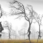 """""""In The Mist"""" by zenin"""