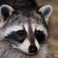 Whiskers by Donnie Shackleford