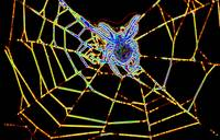 Glowing Spider