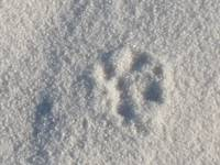 New Mexico dog print in the sand